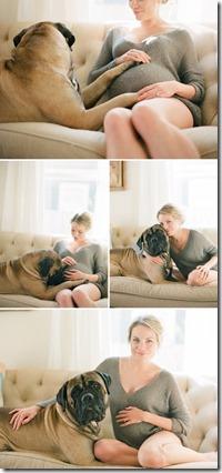 maternity   dog